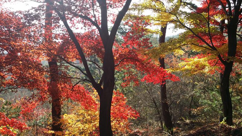 가을 남산의 전경