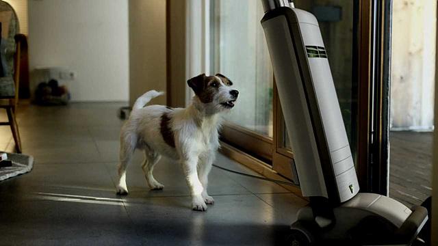 강아지가 줄에 묶인 청소기를 보고 있다