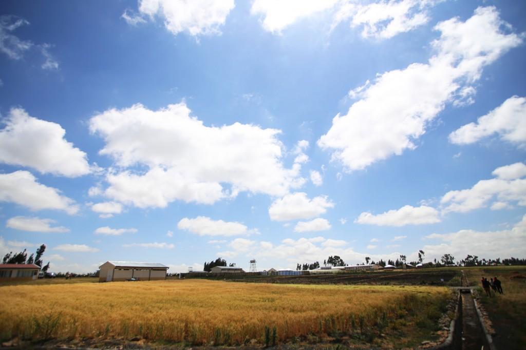 에티오피아의 높고 푸른 하늘
