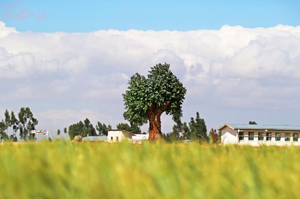 넓은 들판을 배경으로 나무 한 그루가 서 있다