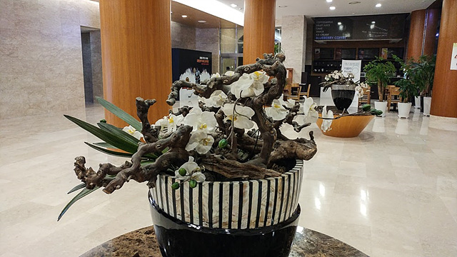 G5로 촬영한 실내 꽃 사진