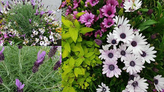 'G5' 멀티뷰 모드을 활용해 제작한 꽃 이미지입니다.