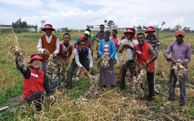 지난 18일(현지시간) 에티오피아 LG희망마을에서 마을 주민들이 마늘을 수확하고 환하게 웃고 있다. 이번 마늘 수확으로 주민들은 연평균 수입의 2~3배에 달하는 수익을 얻게 됐다. LG전자는 에티오피아 기후와 토양에 알맞은 작물을 고르기 위해 양파, 당근, 마늘 등 16종의 작물을 시범재배했다. 그 중 마늘이 가장 적합하다고 판단, 주민들에게 추천하고 재배법을 전수하는 등 적극적으로 지원했다.