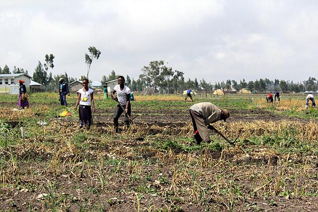 LG 희망마을 주민들이 마늘 농사를 짓고 있는 모습