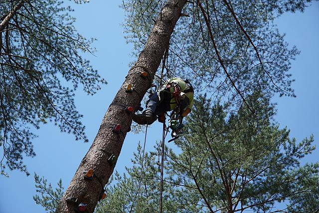 각종 장비와 매듭법을 이용해 나무를 안전하게 오르는 방법을 교육 중인 모습