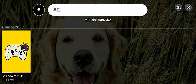 '무도' 검색 시 방송 프로그램 검색 결과 화면