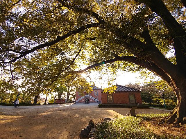 역광에서 나뭇잎이 까맣게 나오는데 빛이 들어오는 나뭇잎의 느낌을 살리기 위해 노출을 플러스로 바꿔서 촬영한 사진입니다.