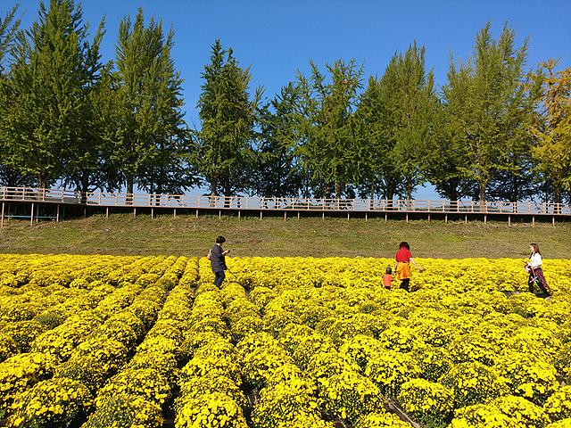 일반 렌즈로 촬영한 꽃밭 사진