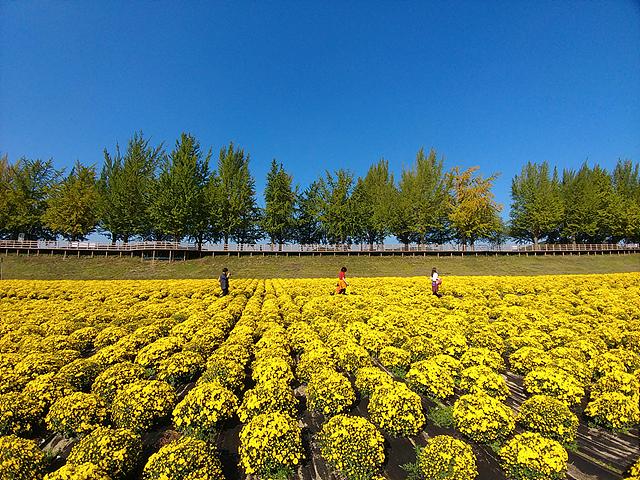 광각 렌즈로 촬영한 꽃밭 사진