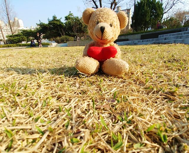곰돌이 사진