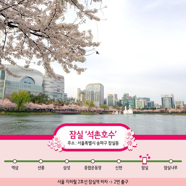 0419_도심속벚꽃나들이01