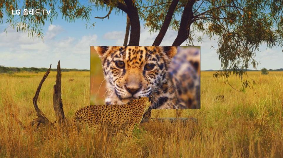 LG전자가 20일 올레드 TV 광고를 온에어했다. 'LG 올레드 TV'로 실제 눈으로 보듯 경이로운 대자연을 즐길 수 있다는 내용이다. 내셔널 지오그래픽과 함께 남아프리카공화국, 두바이, 태국 등지서 대자연 영상을 촬영해 광고 영상에 담았다.