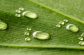 [친환경 스토리] 지구를 지키는 의미 있는 행보 '발자국 인증'