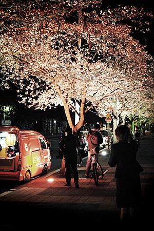 벚꽃 전경