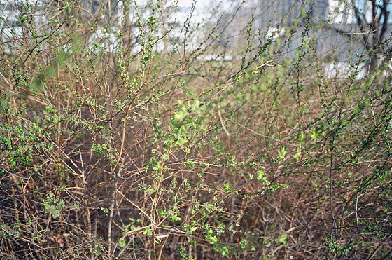 식물 사진