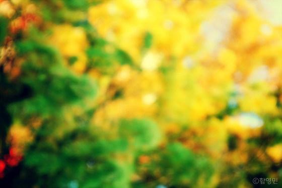 가을 단풍 사진