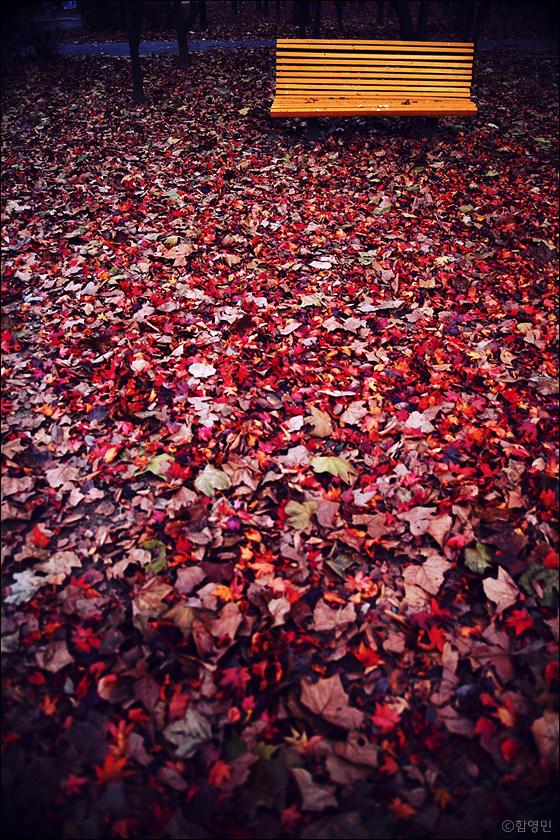 가을 풍경 사진