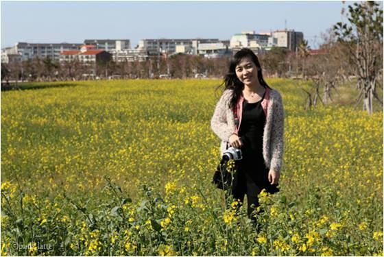 유채꽃밭 전경