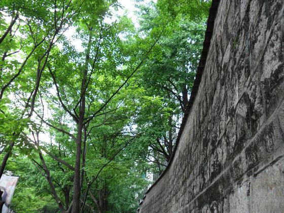 나무 사진