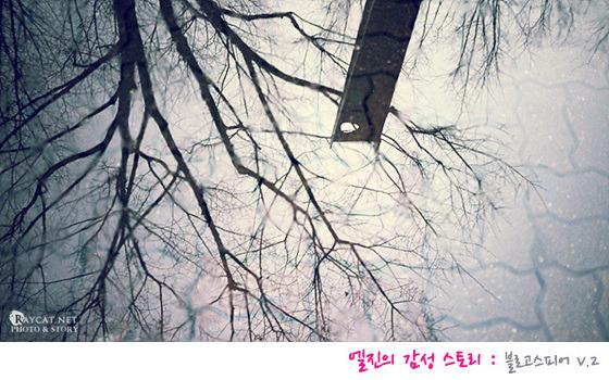 엘진의 감성 스토리 겨울 나무 사진
