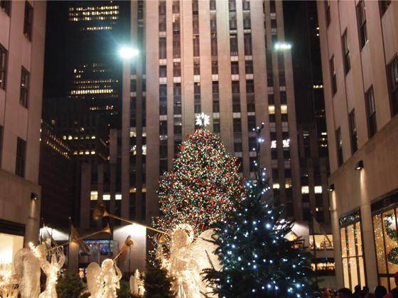 뉴욕 도시의 트리 사진